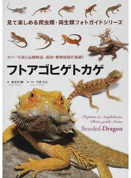 フトアゴヒゲトカゲ カラー写真と品種解説、飼育・繁殖情報が満載!!