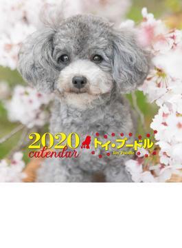 2020年 大判カレンダー トイ・プードル