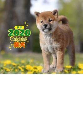 2020年 ミニ判カレンダー 柴犬