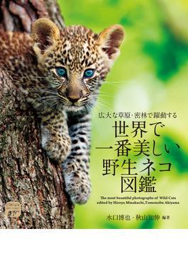 世界で一番美しい野生ネコ図鑑 広大な草原・密林で躍動する