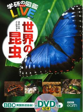 世界の昆虫